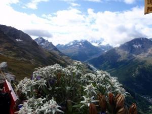 natur-edelweiss2