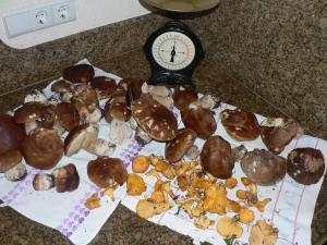 natur-pilze-kochen