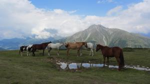 wandern-pferde